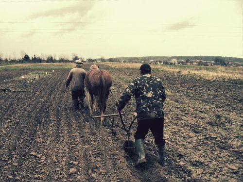 field plow horse