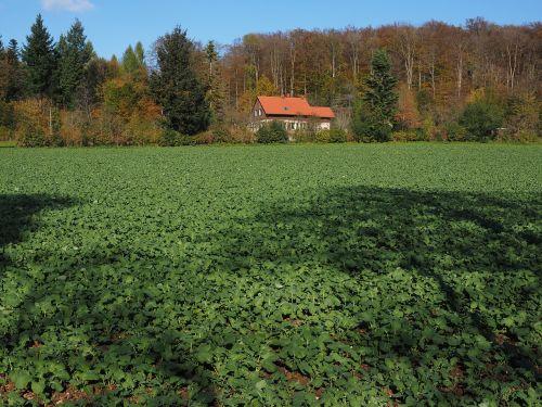 field agriculture winter oilseed rape