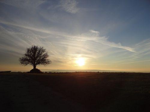 field lorraine amance