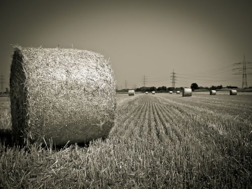 field straw harvest