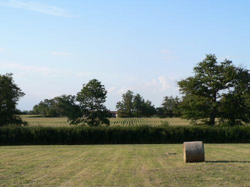 field hay bales bales of hay