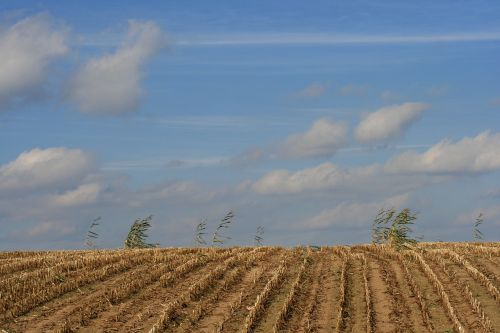 field cornfield harvested