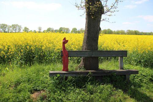 field of rapeseeds yellow oilseed rape