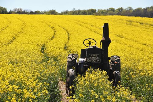 field of rapeseeds tractors age lafountain