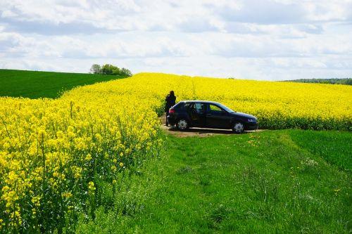 field of rapeseeds photographer auto