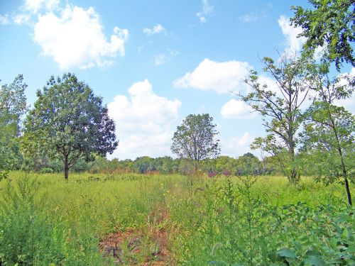 Field Of Weeds And Trees