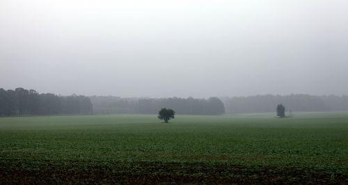 fields autumn rainy