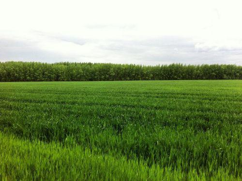 fields landscape summer