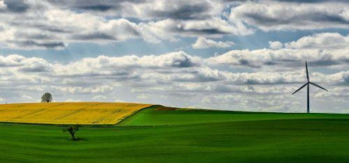 fields oilseed rape yellow