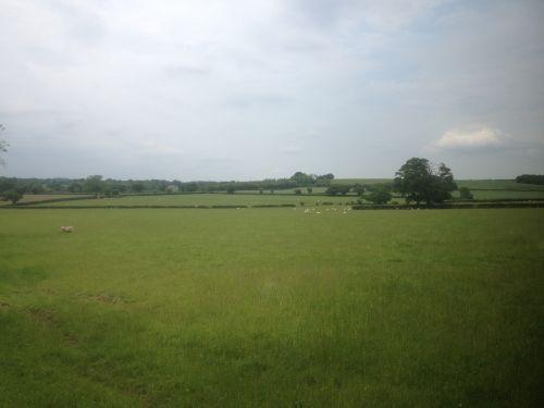 Fields In England