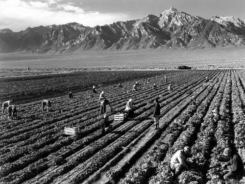 fieldwork harvest mount williamson