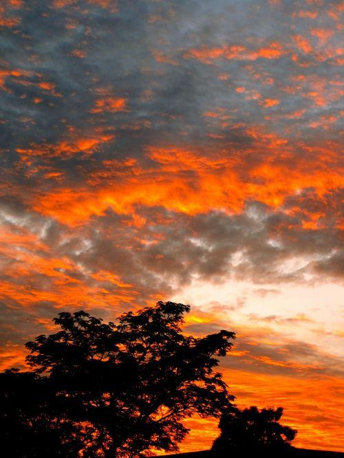 Fiery Cloud Above Seringa Tree