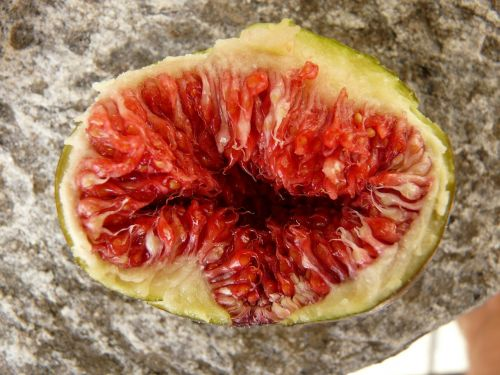 fig fruit eat