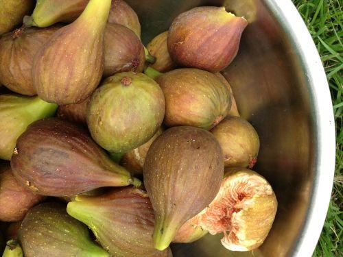 figs metal bowl fresh figs