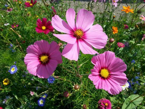 filigree anemone flower