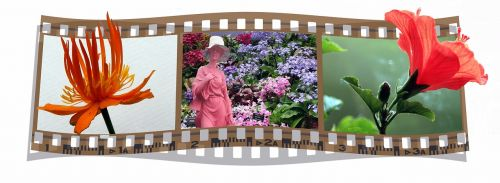 film filmstrip flowers