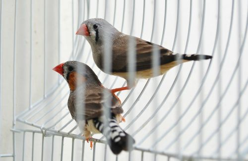 finches birds evolution