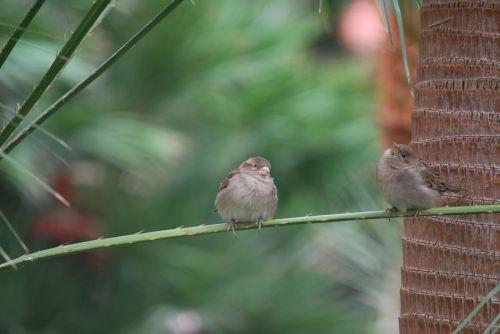 finches bird wildlife