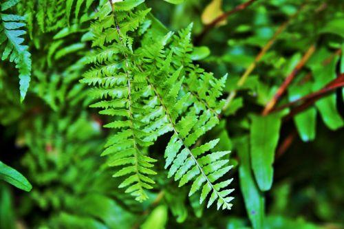 Fine Fern Leaves