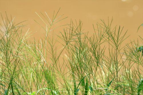Fine Green Grasses