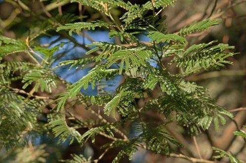 Fine Green Leaves
