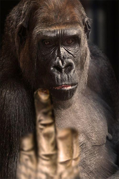finger gesture gorilla gesture