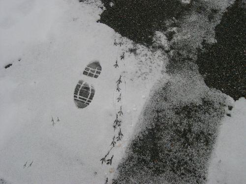 fingerprint snow little bird