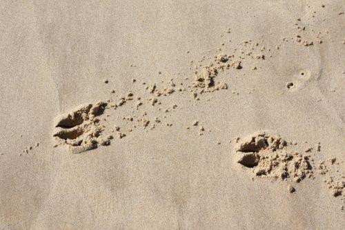 fingerprints sand traces
