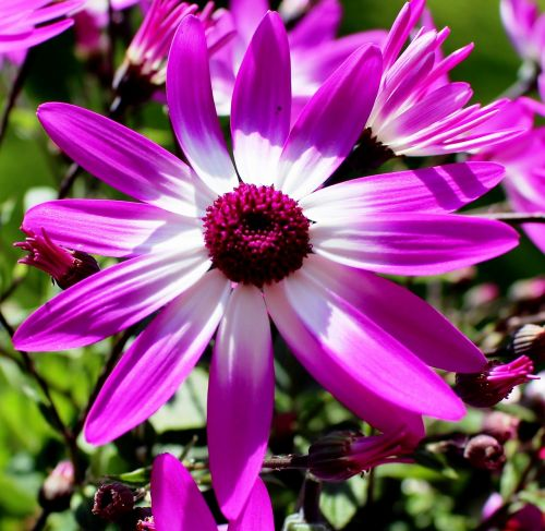 finial flowers polygala