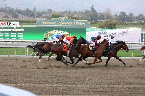finish line horse race thoroughbred