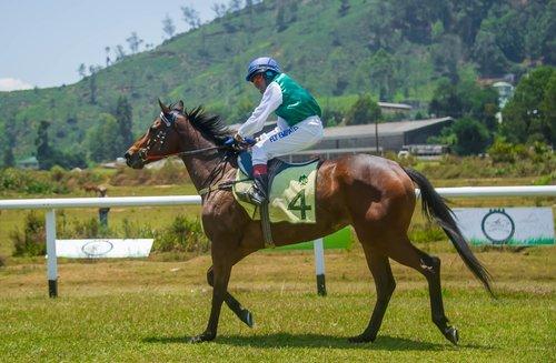 finish line  race  horse