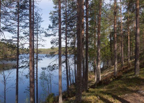 finnish forest ridge