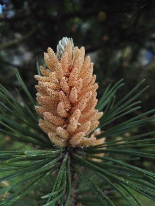 fir summer tree
