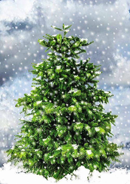 fir christmas tree christmas