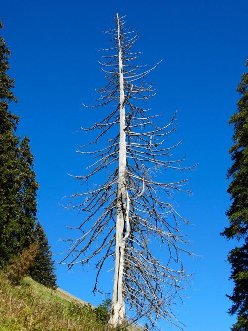 fir mountain world storm damage