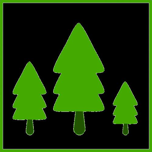 fir tree tree fir