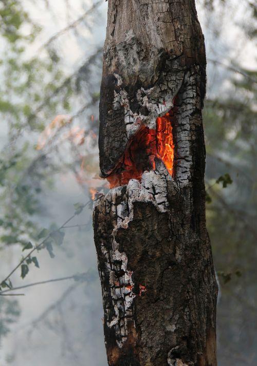fire burning burning for conservation