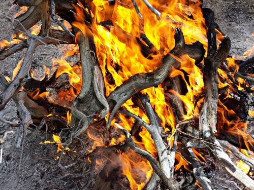 fire wood burn combustion