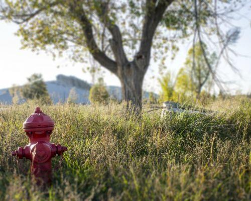 fire hydrant tree field