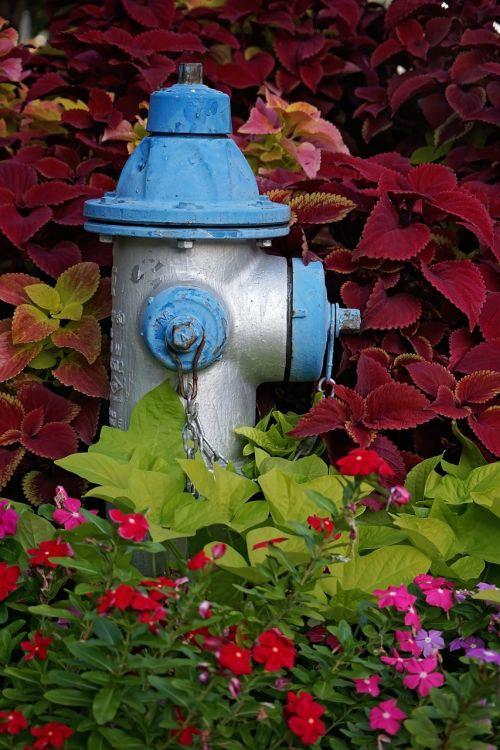 fire hydrant hydrant blue