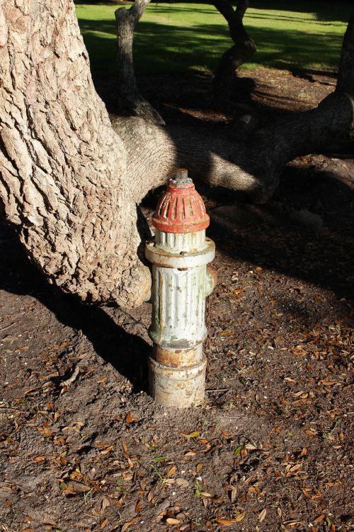 fire plug tree old