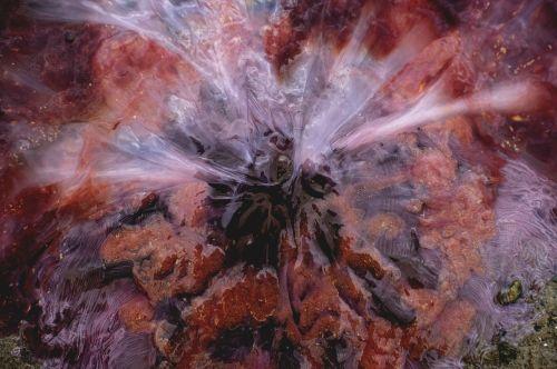 firefighter burn medusa nettle-leaved celledyr