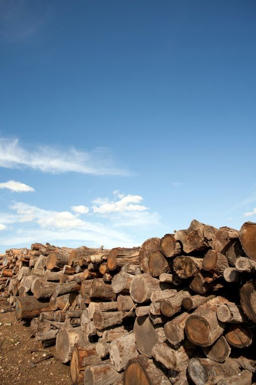 firewood wood firewood stack