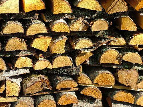firewood stack tree