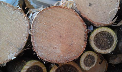 firewood birch manchzhursky walnut