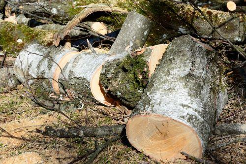 firewood birch lumber
