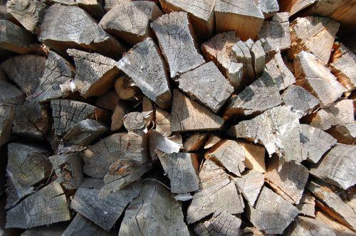 firewood pile tree