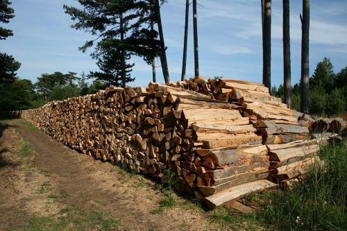 firewood beech firewood holzstapel