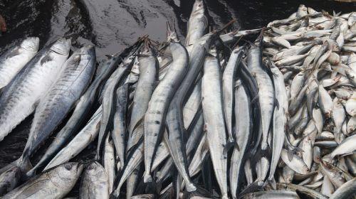 fish fishing fischer