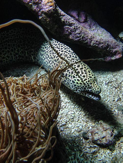fish moray algae